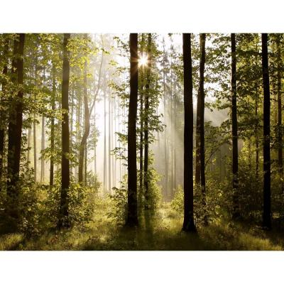 Papel Pintado Fotográfico árboles Forestales 352 X 250 Cm Tipo Fleece No-trenzado Salón Dormitorio Despacho Pasillo Decoración Murales Decoración De Pared